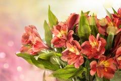 Букет влажной красной лилии Стоковые Изображения