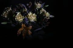 Букет в черноте 2 стоковые изображения rf