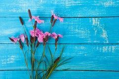 Букет гвоздики полевых цветков на голубой деревянной поверхности Стоковое Изображение