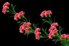 Букет гвоздики цветков Стоковое Фото