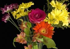 Букет гениальных срезанных цветков в agai апельсина, розовых и желтых стоковые изображения rf