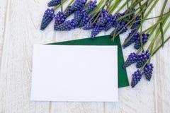 Букет голубого Muscari цветков на белых деревянных досках, небольших колоколах r стоковое фото