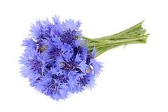 Букет голубых Cornflowers изолированных на белой предпосылке Стоковое Изображение