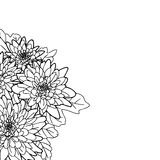 Букет графических цветков на белой предпосылке Стоковое Фото