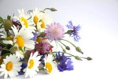 Букет диких wildflowers кладет на белую предпосылку Букет маргариток, cornflowers, мака и клевера стоковое фото rf