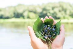 Букет ежевик на стержнях лежит на листьях в руках женщины На предпосылке реки стоковые фото
