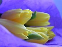 Букет естественных желтых тюльпанов в фиолетовом бумажном конце-вверх стоковое изображение