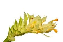 Букет желтого и зеленого цветка изолированного, на белой предпосылке Стоковые Изображения