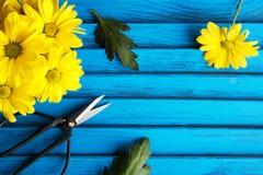 Букет желтых маргариток Стоковые Изображения
