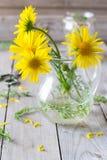 Букет желтых маргариток Стоковое Изображение RF