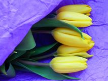 Букет желтых тюльпанов в фиолетовой бумаге стоковые фотографии rf