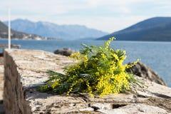 Букет желтых цветков мимозы лежит на пляже, на утесах Стоковое фото RF