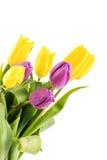 Букет желтых и пурпуровых тюльпанов Стоковое Изображение