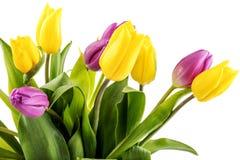 Букет желтых и пурпуровых тюльпанов Стоковые Фотографии RF