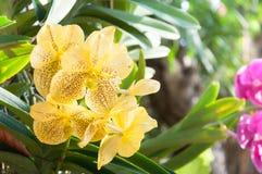 Букет желтых орхидей цветет близко вверх под естественным освещением внешним Стоковое Изображение