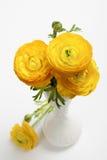 Букет желтых персидских цветков лютика Стоковая Фотография