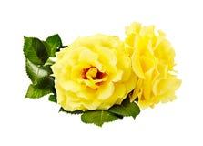 Букет желтых роз на белизне Стоковые Фотографии RF