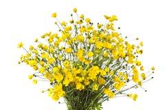 Букет желтых buttercaps изолировал белую предпосылку Стоковое фото RF