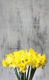 Букет желтых daffodils Стоковые Изображения RF