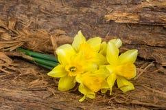 Букет желтых flovers narcissus на деревянной предпосылке Стоковая Фотография