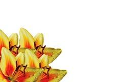 Букет желт-красных лилий Стоковая Фотография RF