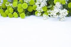 Букет зеленых цветков на белой предпосылке Стоковое Изображение RF