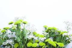 Букет зеленых цветков на белой предпосылке Стоковая Фотография RF