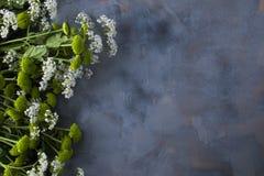 Букет зеленых цветков на серой предпосылке Стоковая Фотография
