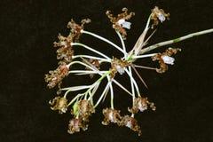 Букет коричневого цветка орхидеи стоковое изображение rf