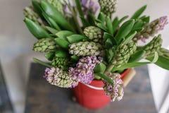 Букет красивых гиацинтов сирени Цветки весны конца-вверх в вазе луковичный завод 0 обоев версии 8 имеющихся eps флористических Стоковое Изображение RF