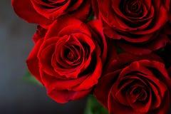 Букет красивых красных роз на черной предпосылке стоковое фото rf