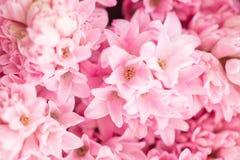 Букет красивых розовых гиацинтов Цветки весны конца-вверх в вазе луковичный завод 0 обоев версии 8 имеющихся eps флористических Стоковое Фото