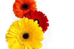 Букет красивых цветков-Gerber на белой предпосылке Взгляд со стороны стоковое фото