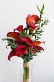 Букет красных лилий calla Стоковое Фото