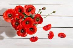 Букет красных маков в стеклянной вазе Стоковое Изображение