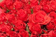 Букет красных роз для романтичной предпосылки подарка Стоковая Фотография