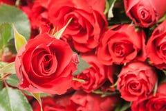 Букет красных роз для романтичной предпосылки подарка Стоковые Фото