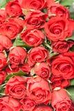 Букет красных роз для романтичной предпосылки подарка Стоковые Фотографии RF