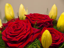 Букет красных роз и тюльпанов желтого цвета Стоковые Изображения