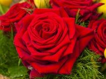 Букет красных роз и тюльпанов желтого цвета Стоковая Фотография