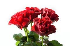 Букет красных роз на белой предпосылке Валентайн карточки s конец вверх Стоковые Изображения RF