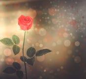 Букет красных роз с зеленым цветом выходит на абстрактное backgroun Стоковые Изображения RF
