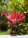 Букет красных тропических цветков антуриума или цветка фламинго в керамической вазе стоит в саде Остров Бали, Индонезия Стоковое фото RF