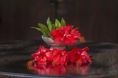 Букет красных тропических цветков в белой керамической вазе стоит в деревянном столе bali Индонесия конец вверх стоковые фотографии rf