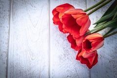 Букет красных тюльпанов на предпосылке белых доск E Концепция весны приходила стоковое фото rf