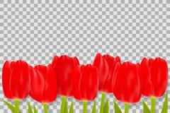 Букет красных тюльпанов с космосом для приветствуя сообщения иллюстрация штока