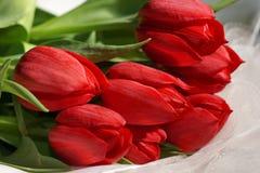 Букет красных тюльпанов Стоковые Фото