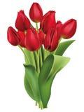 Букет красных тюльпанов Стоковые Фотографии RF