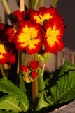 Букет красных цветов и желтых цветов Стоковые Фотографии RF