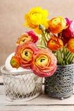 Букет красочных персидских цветков лютика Стоковое фото RF